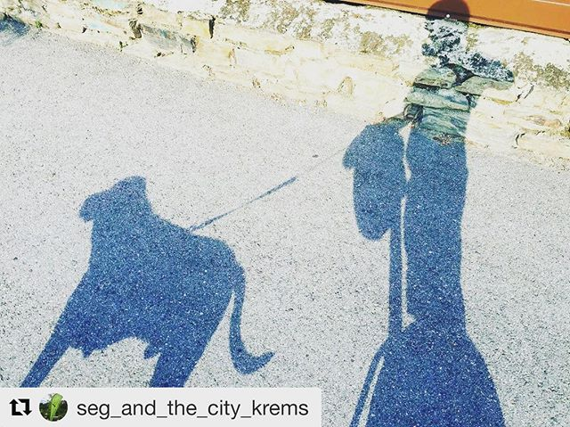 Chasing Segway shadows and a doggie too! Enjoy the sunny days of summer on a segway adventure today. . . . @seg_and_the_city_krems ・・・ Shadow on the wall, or street.